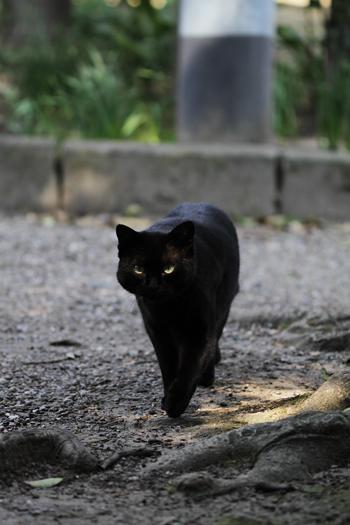 [猫的]モデルウォーキング_e0090124_2314150.jpg