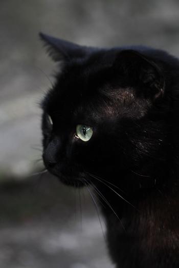 [猫的]眼差し_e0090124_23161181.jpg