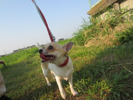 08/11 お散歩03_e0236430_18101782.jpg