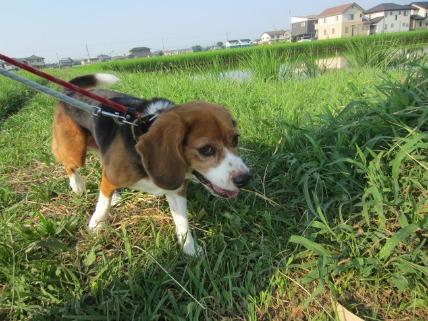 08/11 お散歩03_e0236430_18102247.jpg