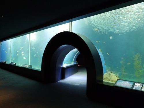 水族館がリニューアルオープン!_e0266363_23144445.jpg
