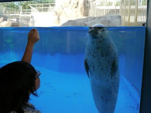 水族館がリニューアルオープン!_e0266363_23163431.jpg