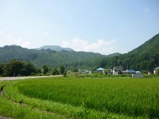 夏山、稲_f0227395_17401823.jpg