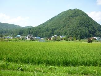 夏山、稲_f0227395_1740581.jpg