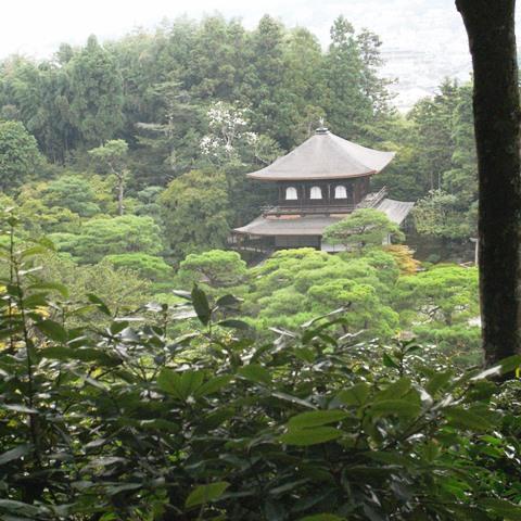 京都で出会ったイワシ_c0160822_11334021.jpg