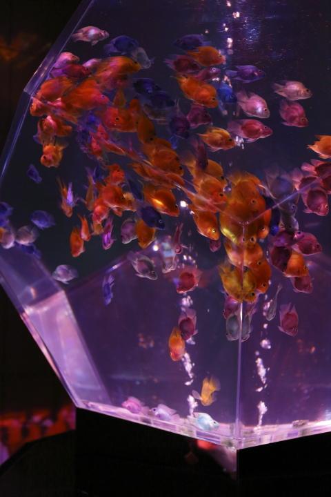 アートアクアリウム展 ~名古屋・金魚の雅~_f0253927_2127126.jpg