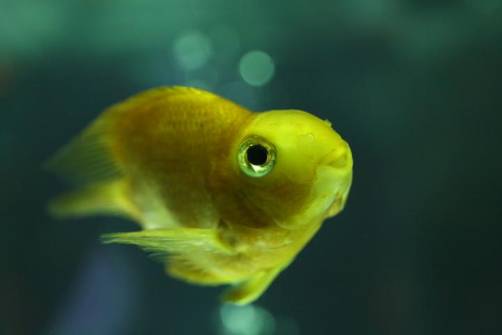アートアクアリウム展 ~名古屋・金魚の雅~_f0253927_2128171.jpg