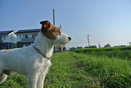 08/12 お散歩03_e0236430_1210286.jpg