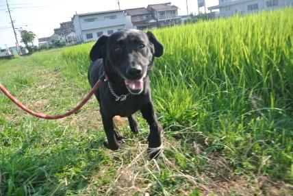 08/12 お散歩03_e0236430_12103537.jpg