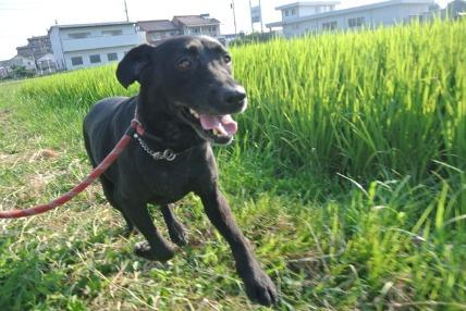 08/12 お散歩03_e0236430_12103551.jpg