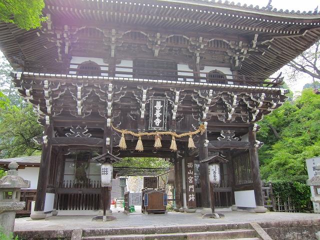 西山宮門跡『善峰寺』は日本一の松(天然記念物)_e0237645_943952.jpg
