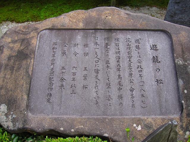西山宮門跡『善峰寺』は日本一の松(天然記念物)_e0237645_962284.jpg