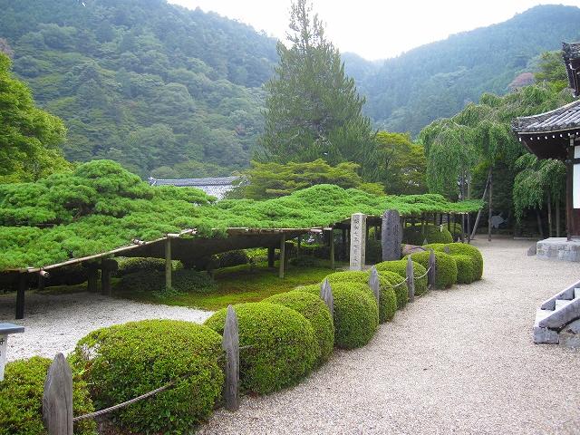 西山宮門跡『善峰寺』は日本一の松(天然記念物)_e0237645_96502.jpg