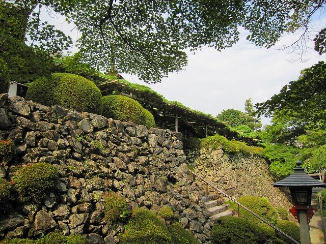 西山宮門跡『善峰寺』は日本一の松(天然記念物)_e0237645_974292.jpg