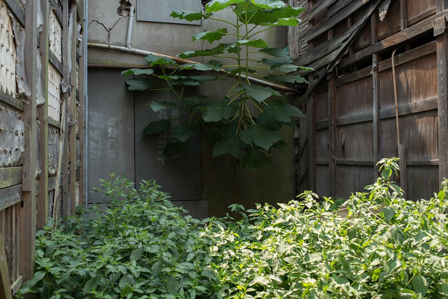 2013/08/12 中野散歩:その1_b0171364_1173366.jpg