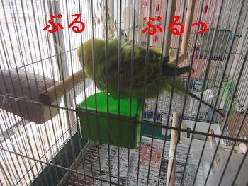 f0196665_22385019.jpg