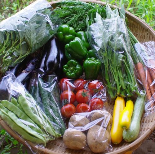 今週の野菜セット(8/13~8/17着)_c0110869_21174477.jpg