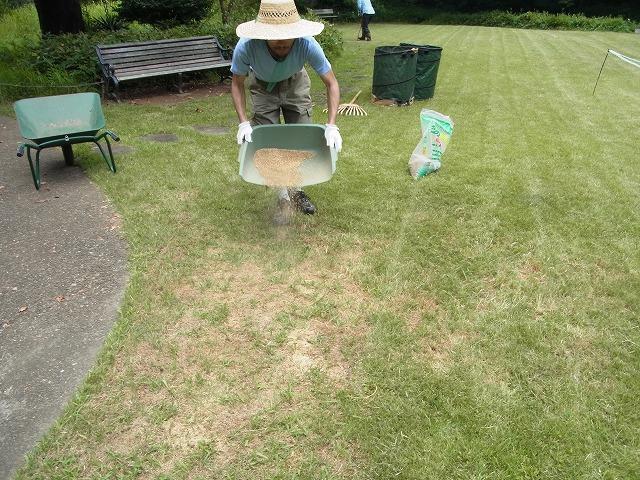 草地の草刈り(機械刈り)とエアレーション、目土まき_b0049307_1652756.jpg
