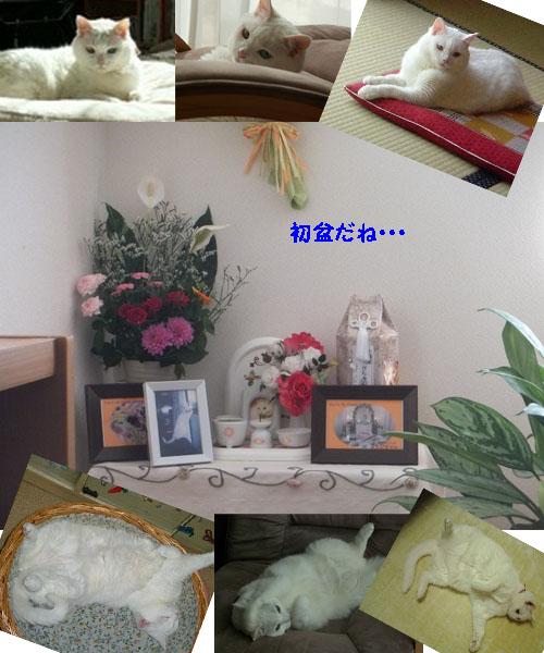 f0032418_1339418.jpg