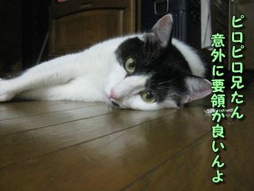 b0151748_1763979.jpg