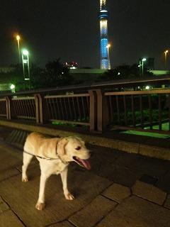 with dog その2   夜のソラマチ♪_a0165160_6441586.jpg