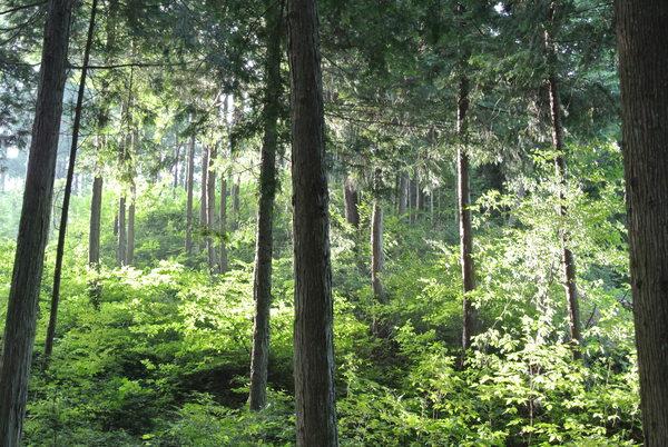 森の中で_f0104867_14232728.jpg