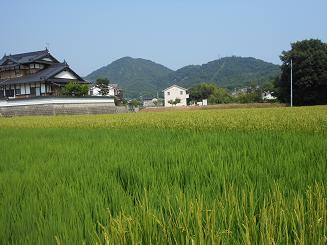 稲の花が咲いた_e0175370_905642.jpg
