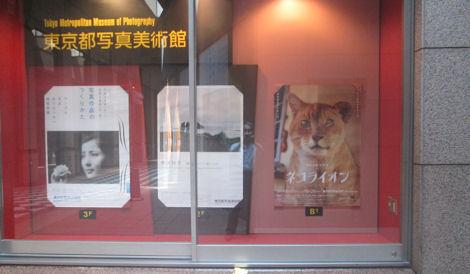 写真美術館の「ネコライオン」展_d0183174_8443442.jpg
