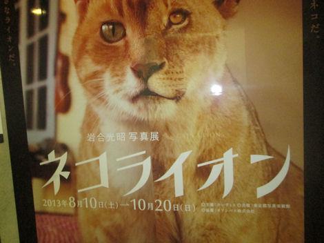 写真美術館の「ネコライオン」展_d0183174_8444926.jpg
