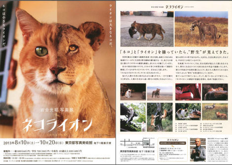 写真美術館の「ネコライオン」展_d0183174_845663.jpg