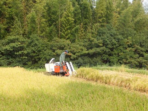稲刈り初日です_d0251679_2316547.jpg