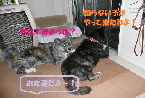 f0121712_16583331.jpg