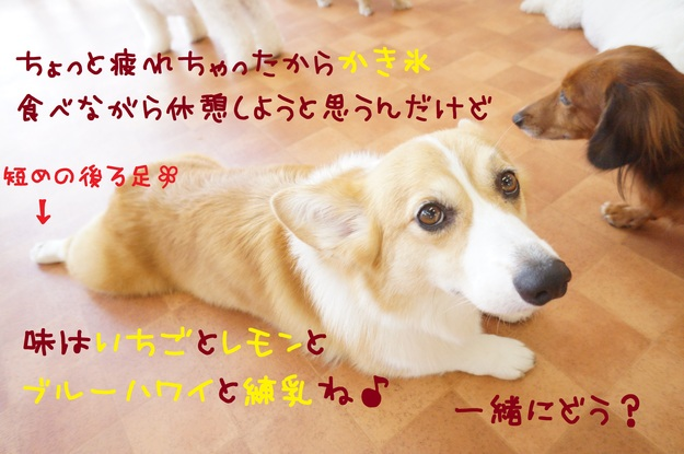 d0220513_2012236.jpg