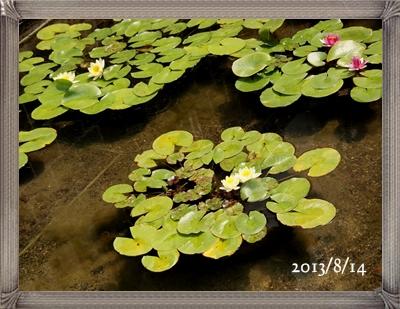モネの庭の睡蓮_c0026824_18305550.jpg