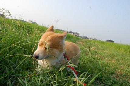 08/14 お散歩02_e0236430_11211621.jpg