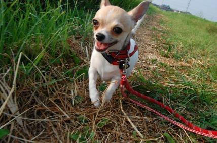 08/14 お散歩02_e0236430_11211862.jpg