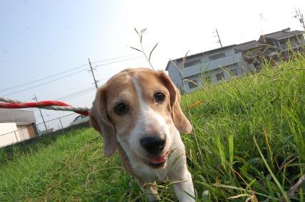 08/14 お散歩02_e0236430_11213866.jpg
