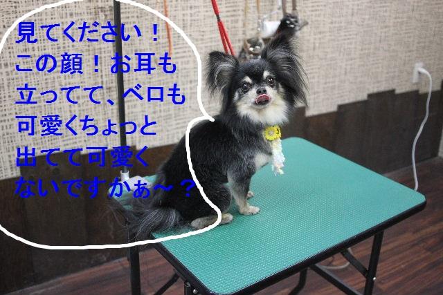 b0130018_0111853.jpg