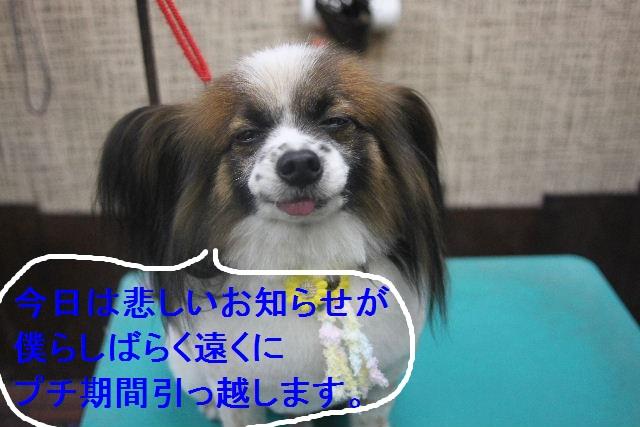 b0130018_054932.jpg