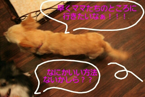 b0130018_14481967.jpg