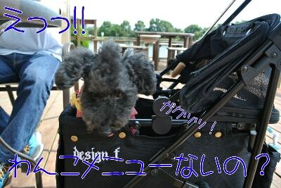 b0236618_0155765.jpg