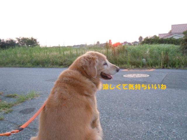 f0114128_6632.jpg