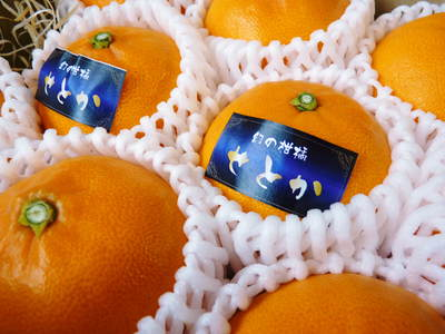 幻の柑橘「せとか」 悲願の販売に向け順調に成長中!!_a0254656_1736382.jpg