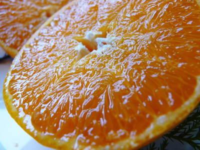 幻の柑橘「せとか」 悲願の販売に向け順調に成長中!!_a0254656_17423765.jpg