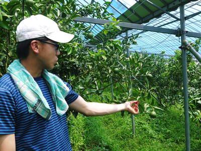 幻の柑橘「せとか」 悲願の販売に向け順調に成長中!!_a0254656_187049.jpg