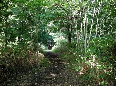 知られざる円山公園(円山公園番外地?)_f0078286_14451932.jpg