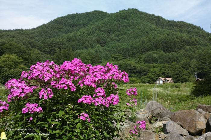 清里山間恒例の夏行事_c0137403_1722450.jpg
