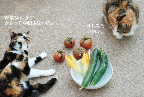 肉球のお手入れ_b0253205_6201737.jpg