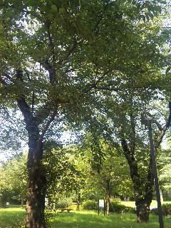blog:緑で深呼吸_a0103940_15283439.jpg