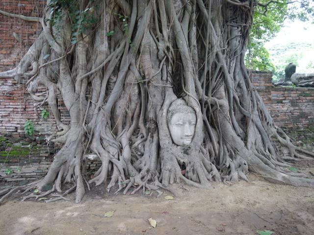 タイへ行く。⑨ ~世界遺産アユタヤ探訪~_f0232060_1426528.jpg